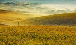 tarla-arazi