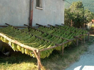 Bulgaristan'da tütün üretimi azaldı