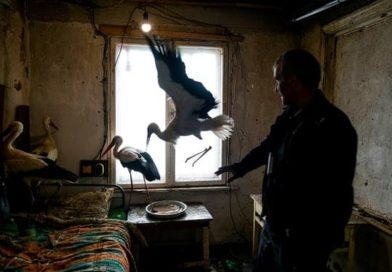 Bulgaristan'da Türk köylüler leylekleri donmaktan kurtardı