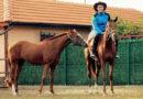 Zagoriçeli Mustafa Süleyman ile atlar ve insanlar üzerine sevgiyle