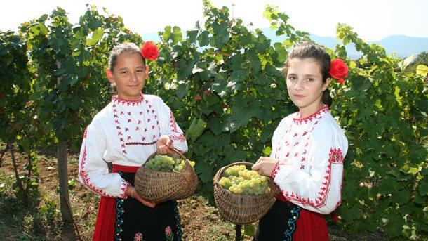 Güneybatı Bulgaristan'da üzüm hasadı başladı